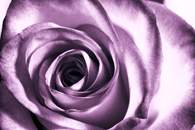 Fototapety w kolorze fioletowym