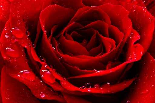 Fototapety kwiaty, obrazy