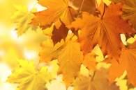 fototapety jesień
