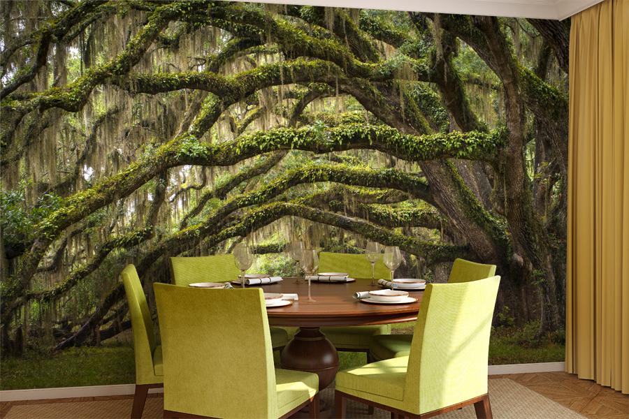 Galeria fototapet z drzewami