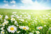 Fototapety wiosna