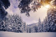 Fototapety zima