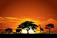 Fototapety Afryka