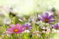 Fototapety Kwiaty, łąka, bukiety