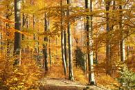 Fototapety W lesie
