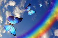 Fototapety Motyle