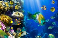 Fototapety ryby